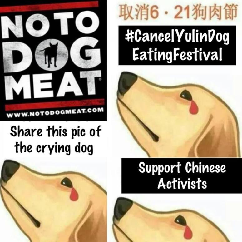 Yulin Dog Meat Eating Festival, China 21st June