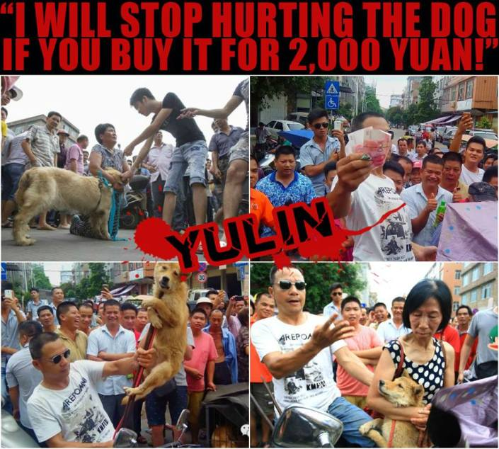 BREAKING NEWS - YULIN 20/06/2014 from TACN fb