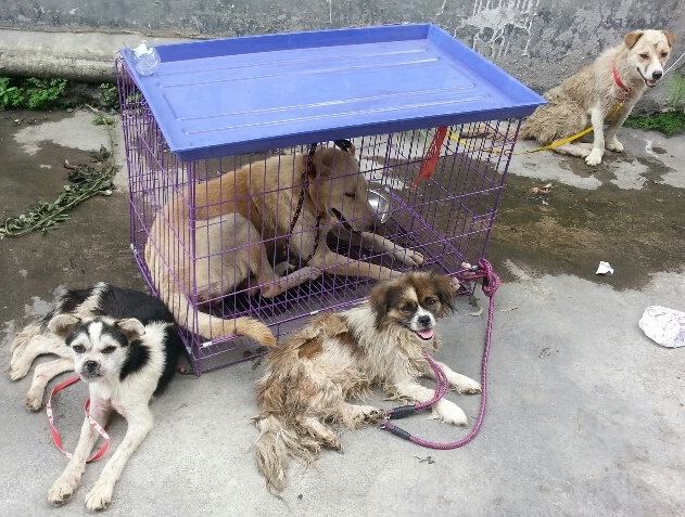 What happened in Yulin