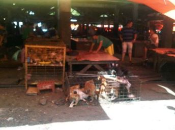 indonesia dogs in cage