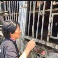 #707Tianjin dog truck rescue