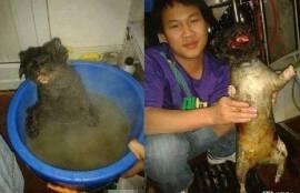 food torture boiling cat