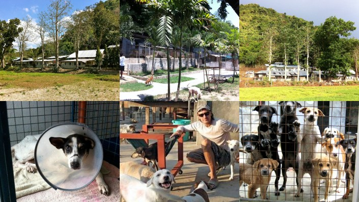 dogs mountain dogs rescued June 20142