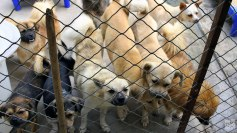notodogmeat-shelters-1