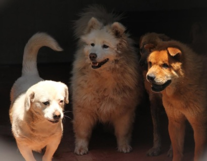 Three dogs.jpg