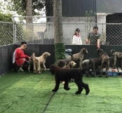 Adopt China Chinese Dog Meat Trade NoToDogMeat 01