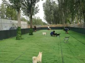 Adopt China Chinese Dog Meat Trade NoToDogMeat 02