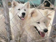 Adopt China Chinese Dog Meat Trade NoToDogMeat 05