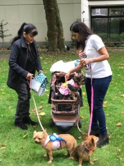 Dog Show Fun Day NoToDogMeat Adoptdontshop 04